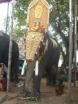 Elephant with thidambu